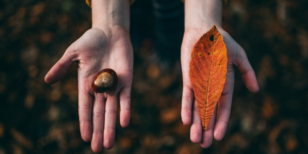 jesień - kasztan i liść